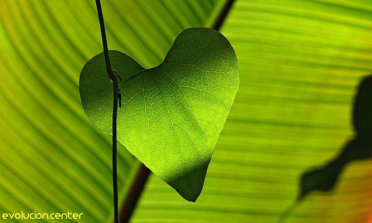 Chacra Verde