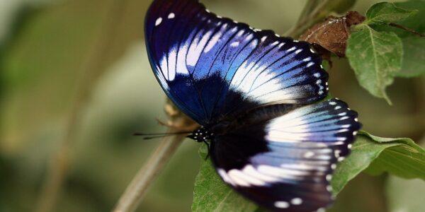 Chacra Azul