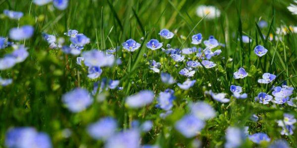 El poder y la magia de las hierbas