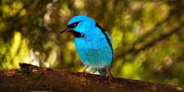 Un pájaro azul, un vestido y un cerezo